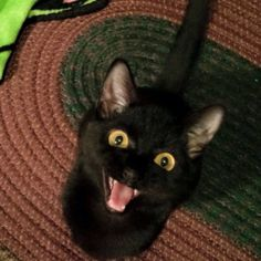 How we feel about the weekend! You feelin' the same?! #cats #weekend #zymox