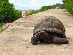 turtle.jpg 948×711 píxeles