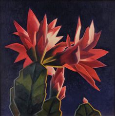 Ed Mell. Beautiful cactus flowers