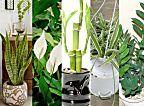 As plantas não devem ficar só no chão: inspire-se com 20 exemplos diferentes que provam a beleza dos jardins verticais