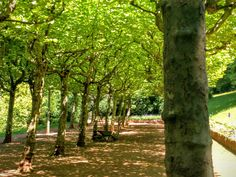 A walk among the trees (Esch-sur-Alzette Luxembourg) #tree