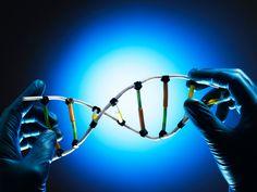 Se conoce así a la secuencia de nucleótidos en la molécula de ADN (ácido desoxirribonucleico).