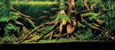 van aquadrama tot ooit een prachtige jewel rio 240... flying guppy - Het Nederlandstalig AquaForum