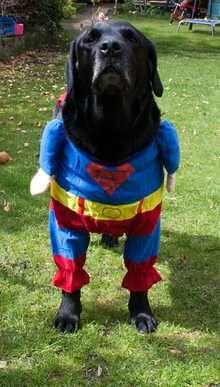 Monty, Pedlars 111th Dog of the Week