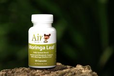 """Another Air Thai Life superfood. The mighty Moringa product boosts the immune system and metabolism and has excellent anti-aging properties. Moringa also assists in healthy digestion and cell integrity, that's why it's Immune Support. Scientists say: """"It's the most nutrient-rich plant ever discovered"""" Nothing else comes close to Moringa as a comprehensive, natural system support product. Air Thai, Superfood Supplements, Detox Organics, Moringa Leaves, Metabolism Support, Scientists, Immune System, Integrity, Anti Aging"""
