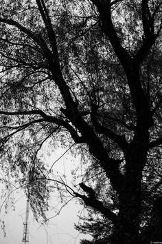 写真 葉桜 夏の桜の木