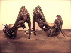 Fashion-loving taxidermist Divya Anantharaman's dead bird shoes