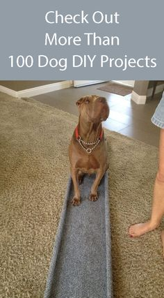 Dog Ramp - Build this inexpensive dog ramp or check out more than 100 other dog DIY projects. Dog Ramp - Build this inexpensive dog ramp or check out more than 100 other dog DIY projects. Puppy Training Schedule, Training Your Puppy, Dog Ramp, Dog Activities, Puppy Care, Old Dogs, Diy Stuffed Animals, Dog Toys, Your Dog