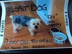 Jason EdwardCT Lost Pets 3 hrs · yorkie, tan black https://www.facebook.com/groups/515982125153272/permalink/974468315971315/  Please contact Kelly Proulx if you find him please share! Vernon CT