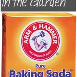 10 Ways to Use Baking Soda in the Garden