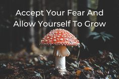 Accept Your Fear And Allow Yourself To Grow - Shamanic CEO