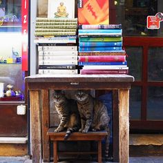 If it fits, we sits.  #happycaturday #Istanbul #cat  (at Beyoğlu İstiklal Caddesi)