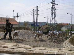 Le berger et ses moutons à Roquefort-sur-Soulzon, (12)