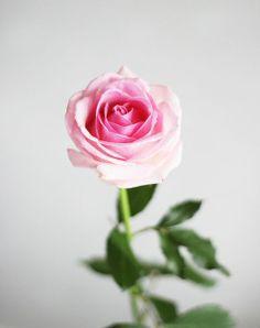 #Pretty #Rose ♥Manhattan Girl