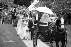 Wedding Transportation- How Will You Get There? Wedding Transportation, West Coast, Ireland, Wedding Day, Horses, Weddings, Animals, Pi Day Wedding, Animaux