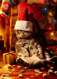 """crazy cute animal photos - Christmas """"Cat in the Hat"""" ~ Too much Christmas """"CHEER"""""""