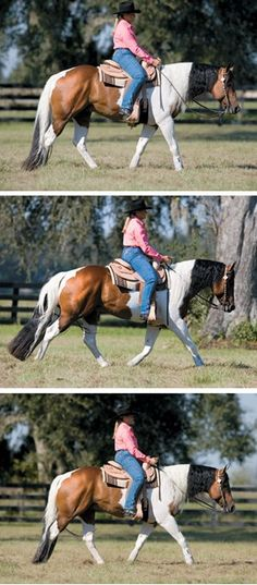 4 Reasons to Try Western Dressage - Pferd Riding Hats, Horse Riding, Trail Riding, Equestrian Outfits, Equestrian Style, Equestrian Problems, Horse Training Tips, Horse Tips, Western Riding