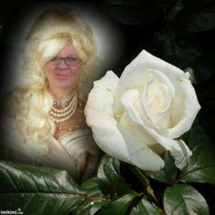 love white rose-prashna