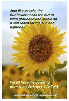 The theme of my site is sunflowers - they symbolize growth and beauty when we grow towards the light!