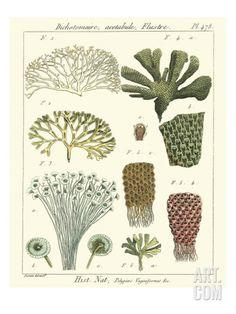Coral Classification I Art Print by Vision Studio at Art.com