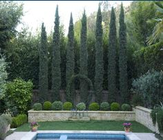 Beautiful, making privacy for our new small yard. This is my vision, now to make it work!