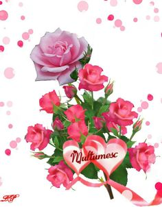 Thankful, Rose, Plants, Gifts, Education, Pink, Presents, Plant, Favors