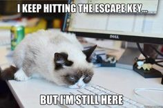 Grumpy cat, grumpy cat meme, grumpy cat quotes, funny grumpy cat quotes, grumpy cat jokes …For the funniest quotes and hilarious pictures visit www. Grumpy Cat Quotes, Gato Grumpy, Funny Grumpy Cat Memes, Cat Jokes, Grumpy Kitty, Cats Humor, Hilarious Memes, Kitty Cats, Cute Cat Memes