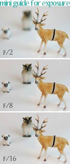 Conceptos básicos para fotografía manual