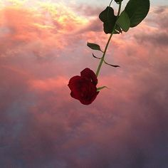 Find images and videos about aesthetic, flowers and red on We Heart It - the app to get lost in what you love. Flower Aesthetic, Red Aesthetic, Aesthetic Pictures, Aesthetic Vintage, Rose Wallpaper, Tumblr Wallpaper, Tumblr Flower, Way To Heaven, Landscape Wallpaper