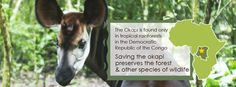 Save the Okapi and the preserve the Ituri Forest and other species of wildlife