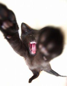 Black Cat Batman Action!