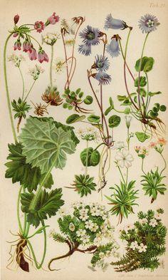 Illustration Botanique, Botanical Illustration, Kensington Gardens, Plantes Alpines, Mason Bees, Flora, Jasmine, Bird Prints, Botanical Art