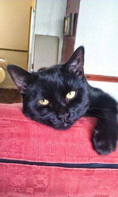 I'm so cute World Domination, Cats, Animals, Gatos, Animales, Animaux, Animal, Animais, Kitty