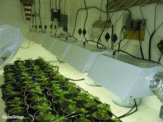 How to Legally Transport Marijuana in Colorado