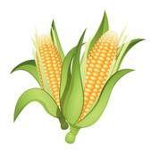 10 best corn images