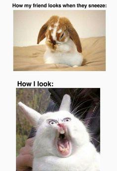 32 Funny Animal Pictures With Captions Of The Day – ViralAPK.Com 32 lustige Tierbilder mit Bildunterschriften des Tages – ViralAPK. Super Funny Memes, Funny Dog Memes, Crazy Funny Memes, Really Funny Memes, Funny Relatable Memes, Haha Funny, Funny Dogs, Funny Stuff, Dark Humor Jokes