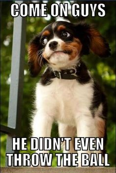 Suspicious Puppy