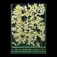 Ovando Floral and Event Design