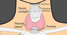 Home Remedies for Hyperthyroidism Treatment may or not help but not harmful***