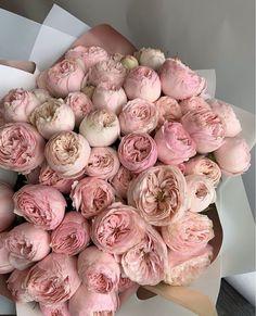 Dark Flowers, Pastel Flowers, Simple Flowers, My Flower, Vintage Flowers, Beautiful Flowers, Piones Flowers, Luxury Flowers, No Rain