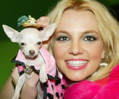 Britney Spears' Chihuahua Bit Bit shot to fame in 2004 when the singer hit the red carpet at an awards show with the tiny dog wearing a $100,000 diamond-encrusted collar.
