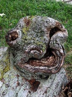 Strange Trees – DesignSwan.com looks like a monster