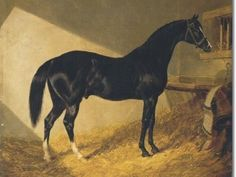 Camel(1822)(Colt) Whalebone- Selim Mare By Selim. 4x5 To Eclipse, 4(C)x4(F)x5(F) To Highflyer, 4(C)x5(C)x 5(F)x5(F)x 5(F) To Herod, 5(C)x5(C)x 5(F) To Snap. 7 Starts 5 Wins 2 Seconds. Won Port S(Eng). Another Son Of Whalebone Who Would Make His Presence Felt For Many Years Through His Offsprings. Sire Of Touchstone. Leading Sire In England & Ireland In 1838.