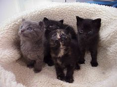 Exclusively Cats Veterinary Hospital Blog: Kitten Care: How old is the orphaned kitten I found?