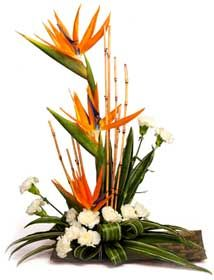 bird of paradise flower arrangement - Bing Images