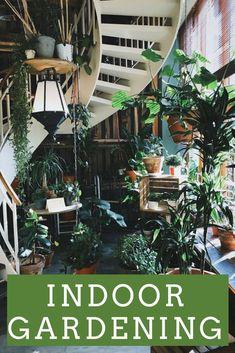 Van kleine plantjes in de vensterbank tot hele hydroponics systemen: Ik deel de vele indoor gardening mogelijkheden waarmee je succesvol binnenshuis kunt moestuinieren. #HydroponicsGardening