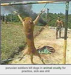 Bolivian soldiers from using dogs as target practice! Quando non sei tu la vittima, diventa molto facile giustificare crudeltà, ingiustizia, disuguaglianza, schiavismo, assassinio. Questo stiamo facendo subire agli animali. [Gary Yourofsky]