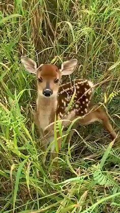 Pet Deer, Baby Deer, Pet Birds, Cute Little Animals, Cute Funny Animals, Cute Dogs, Corzo Animal, Cute Animal Videos, Tier Fotos