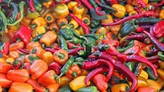 Exotic Hot Chile Pepper Collection 130 seeds great gift for gardeners chili sampler 6 fierce peppers Datil Fish Thai Pepper Serrano Chile Poblano, Spicy Recipes, Real Food Recipes, Food Tips, Thai Peppers, Types Of Peppers, Fruits And Veggies, Vegetables, Vegetarian