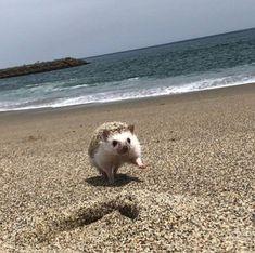 On the beach Baby Animals Super Cute, Pretty Animals, Cute Little Animals, Cute Funny Animals, Animals Beautiful, Baby Animals Pictures, Cute Animal Photos, Funny Animal Pictures, Hedgehog Pet